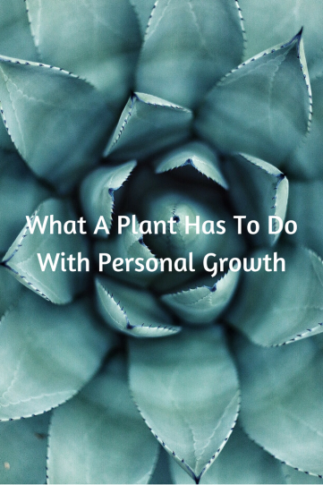 It seems silly but a plant taught me about personal growth. Read this post to find out how.