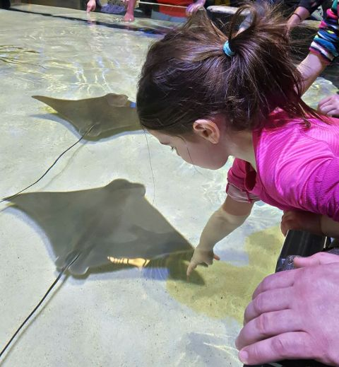 One of Addie's favorite attractions at the National Mississippi River Museum and Aquarium is the Sting Ray Touch Pool.